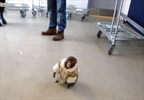 Ikea monkey won't face eviction-Image1