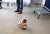 Ikea monkey won't face eviction-Image1