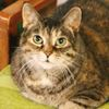 Some big, bold and beautiful felines waiting for a home
