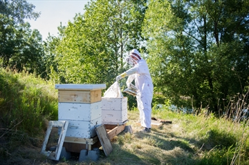 Beekeeper Rich Kufske tends to his hives on a rural property outside of Waterloo.