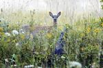 Thorold hunting bylaw proposals under fire from sportsmen