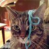 Yarn cat