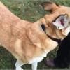 Adopt-A-Pet: Daisy needs a home