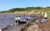 Community rallies to save beached whales-Image1