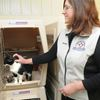 15 cats rescued in house fire