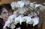 Orchid show and sale at Royal Botanical Gardens