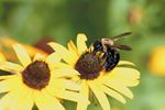 Protecting pollinators