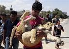 Gaza cub