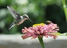 Pollinators need help