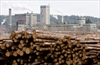 Canada, Japan clash over timber in TPP talks-Image1
