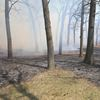 Controlled burns in High Park