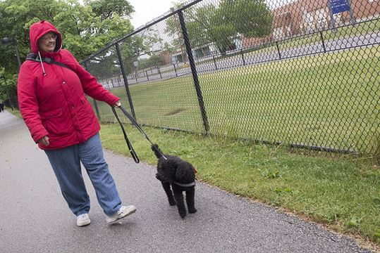 how to train your dog to walk beside you cesar