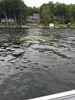 Weeds in Trent-Severn Waterway lakes