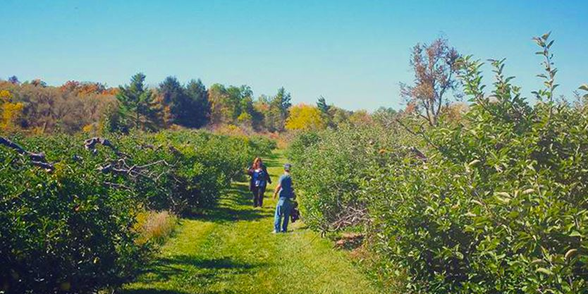 Where to go apple picking in Toronto and the GTA | Toronto com