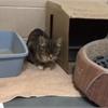 Adopt A Pet: Zara needs a home