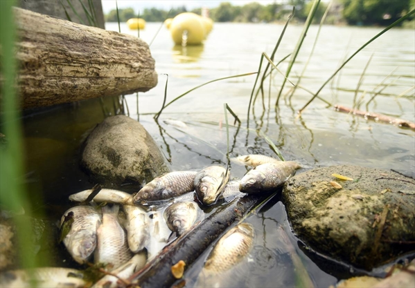 Ministry advises 'care' when residents dispose of fish from Alder Lake