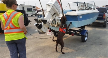 Drones, dogs and DNA new tools to detect invaders-Image1