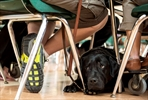 New B.C. law to target fake service dogs-Image1