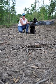 Ash borer now killing woodlots: city– Image 1