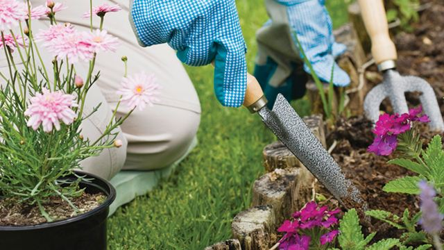 Things You Can Plant In Your Garden To Help Our At Risk