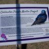 Purple Martin project / McAffee St. Playground