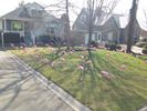 70 flamingos