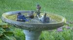 Bathing blue birds