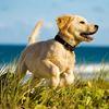 Prevent parasites, keep your pet healthy