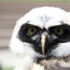 Amazing Animals: Meet Professor Owl-Bert from the Toronto Zoo