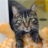 Adopt a Pet: Zinfandel needs a home